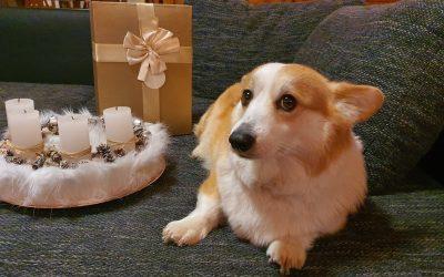 Ne vegyél kutyát Karácsonyra!